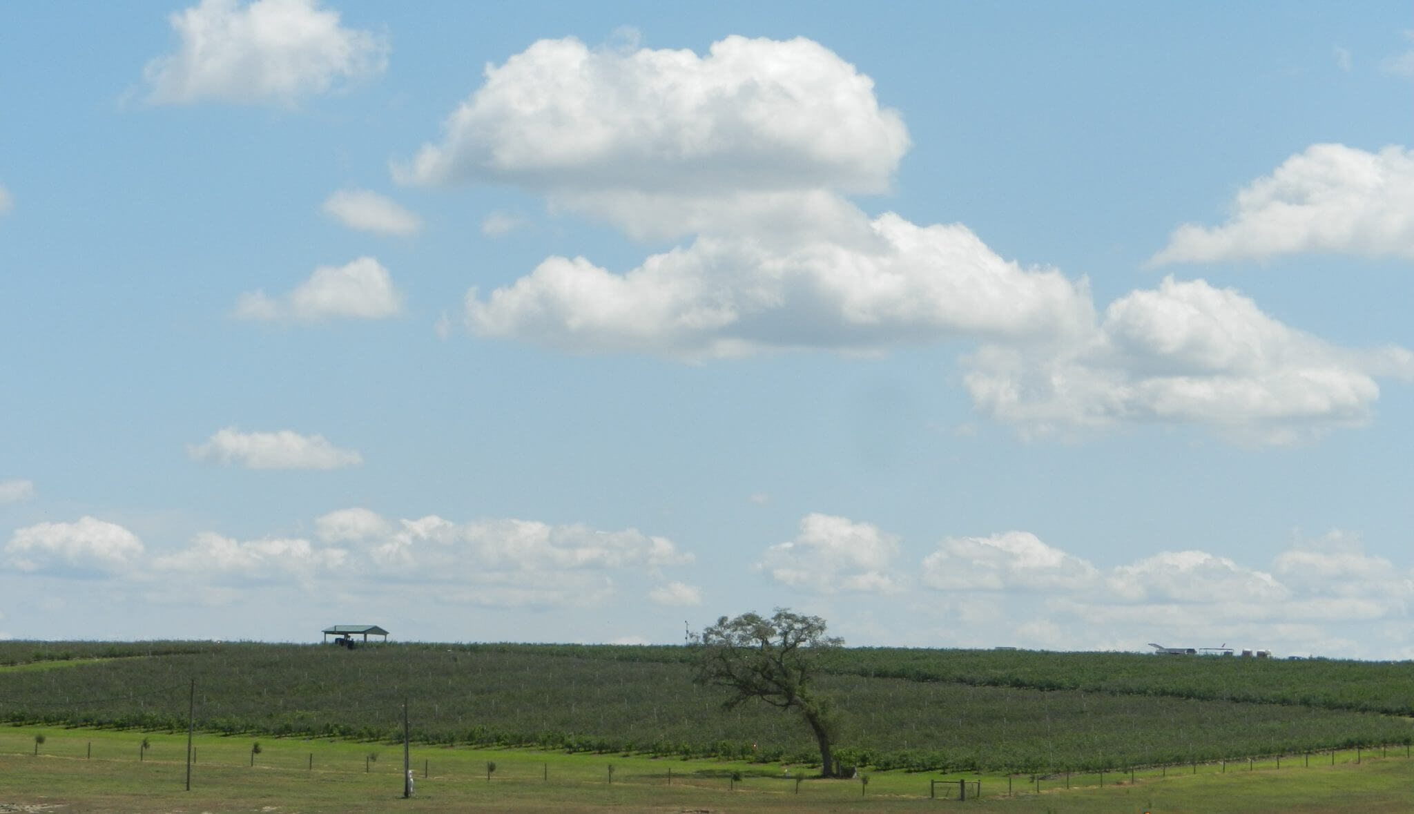 Spring Valley Farms in Umatilla, FL (A Wish Farms Blueberry Grower) #wishfarms
