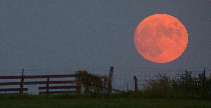 Strawberry Moon Over Farm Wish Farms Florida